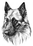 12 Tervueren Belgian Shepherd Notelets with Envelopes